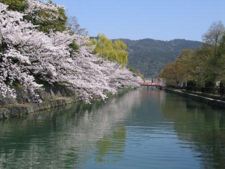 滋賀の琵琶湖から京都に水を運ぶための水路。第3代京都府知事北垣国道によって計画され、工学士の田邊朔朗が設計、工事を行いました。明治18年(1885)に着工、同23年(1890)に第一疏水が竣工。完成当初は水力発電としても利用され、日本初の電車の開業にも貢献するなど、京都の活性化につながる一大事業となりました。現在も疏水は水道用水をはじめ、発電や防火などに利用され、京都市民の貴重な水源となっています。疏水沿いには桜が植えられており、桜の時期になると多くの人が散策に訪れます。水上からの花見を楽しめる十石舟も運行されます。