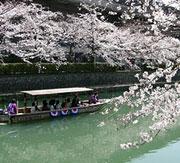 岡崎の疏水を運行する舟に乗って、水上からのお花見はいかが。往復3キロのコースには、水面ギリギリまで枝を垂れた桜回廊が続きます。ロマンチックなさくら旅なら、これで決まり!人気の舟なので、お早い時間がおすすめですよ。
