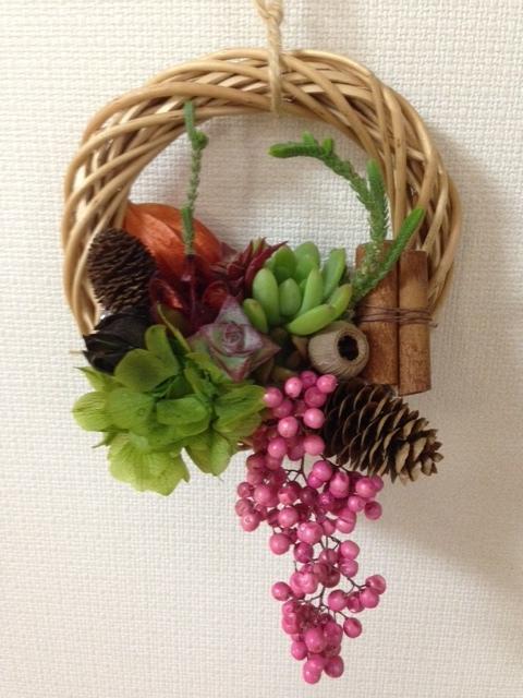 My Brilliant Succulents-1