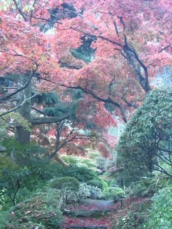 箱根紅葉2