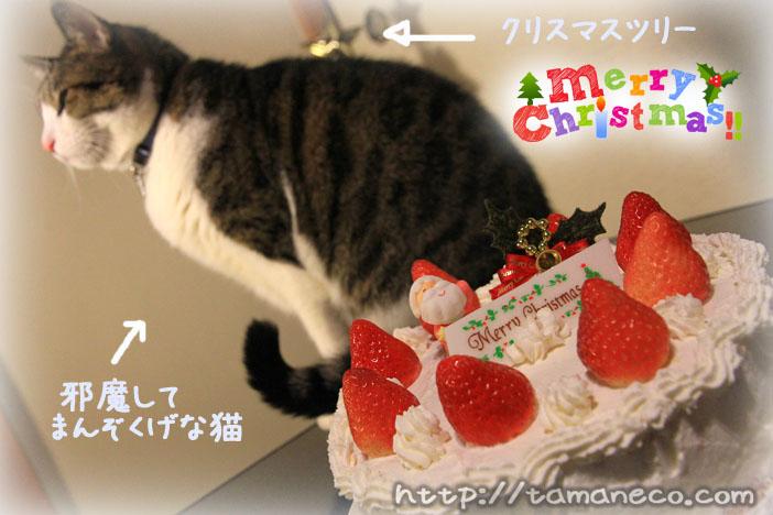 クリスマスケーキと猫
