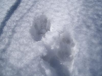 サルの足跡