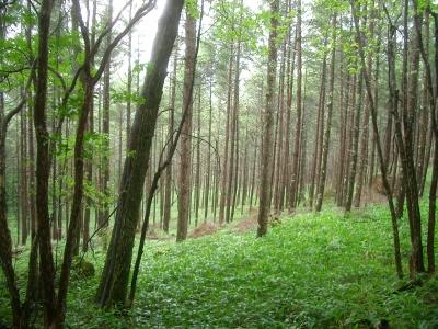 傷んでいる林