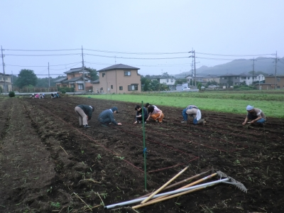 大豆の種蒔き
