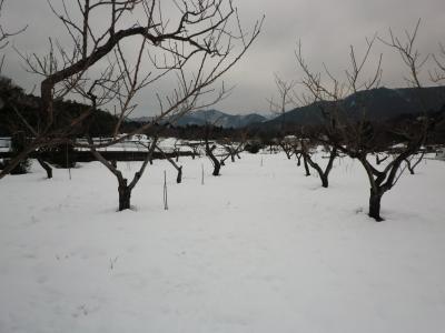 桃畑真っ白