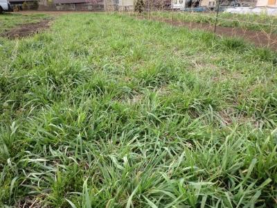 草の生長も早い