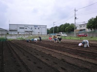 大豆を蒔く