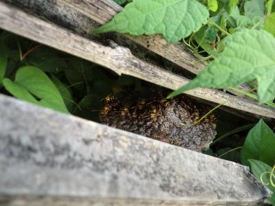 蜂がたくさん