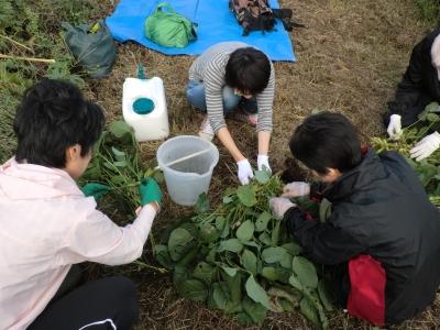 枝豆を取る作業