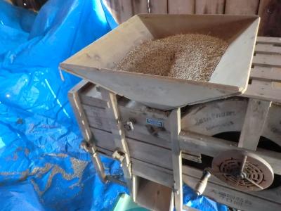 大麦の風選