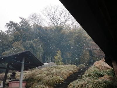 雪が本降りに