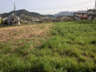枯れた草と牧草
