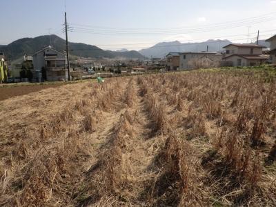 枯れ草と枯れた大豆
