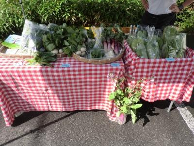 今日の販売野菜