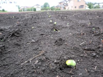 芽が出始めた