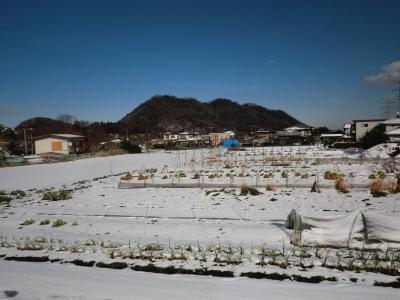 2月4日の雪
