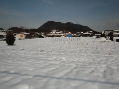 2月8日の雪