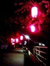 田柄川の桜2