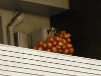 玉ねぎ-3