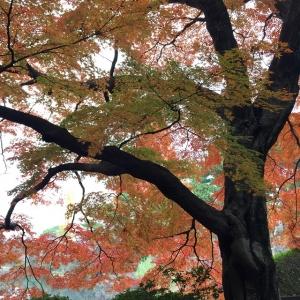 新宿御苑 IMG_2963