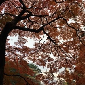新宿御苑 IMG_2966