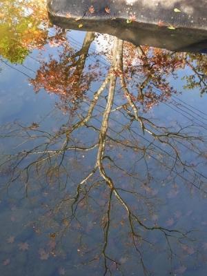 池に映りふたたび紅葉