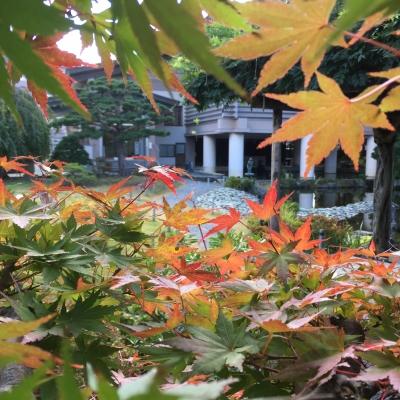 10/25紅葉