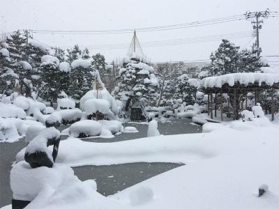 雪吊りされた前庭