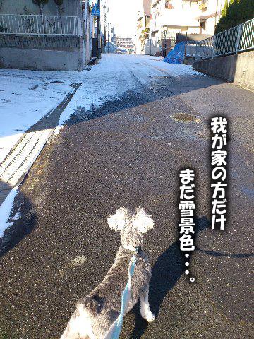 こっから又雪景色。