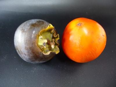 黒柿と普通の柿