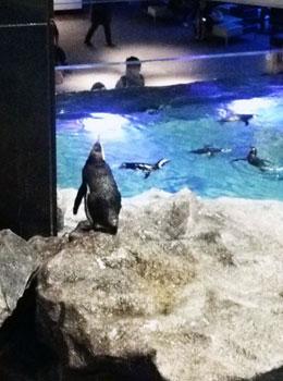 aquarium-01