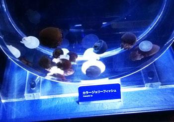 aquarium-05