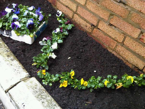 そのお花を庭に植えます