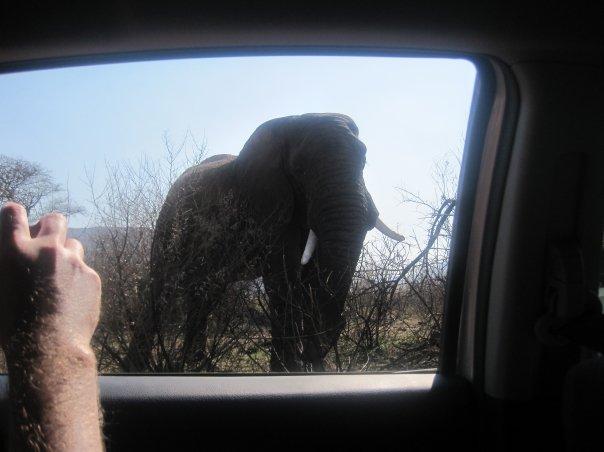 南アフリカのサファリで!車の中から象さんを眺める!