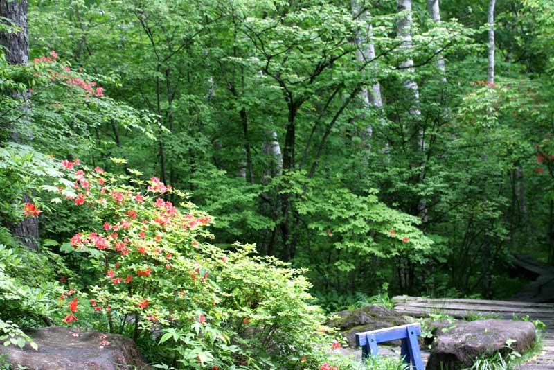 八ヶ岳倶楽部、オリジナルの雑木林の中へ