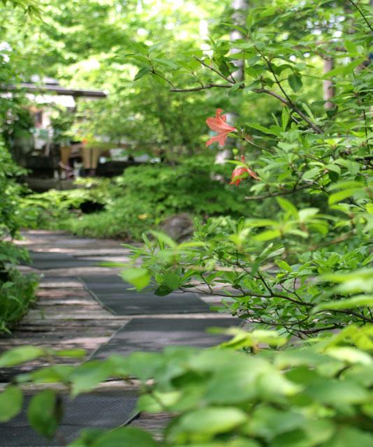 八ヶ岳倶楽部、オリジナルの雑木林の中へ 2