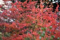 紅葉の盛り