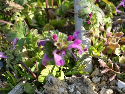 春の芽生え2