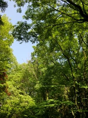 緑地公園10
