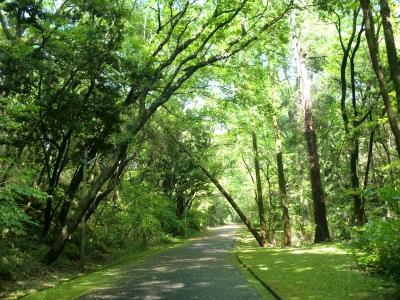 緑地公園13