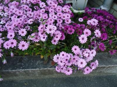 花壇の花3