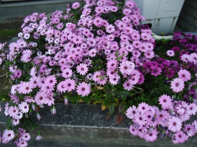 花壇の花4