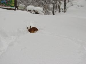 雪の中で遊ぶ-1