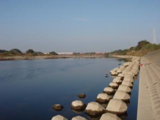 多摩川放流3