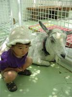 行船公園 ヤギと由依