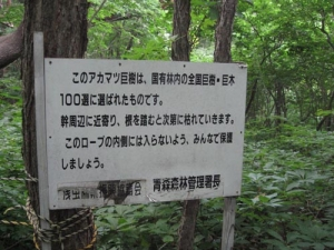 国有林 全国巨樹巨木100選