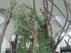 埼玉県こども動物自然公園 Saitama Childrens Zoo コアラ