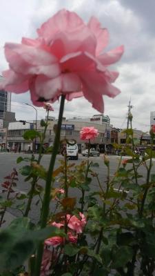 交差点に花壇