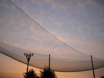 夕陽とネット