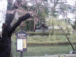 鶴岡公園 花のあと